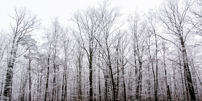 Hiver forestier